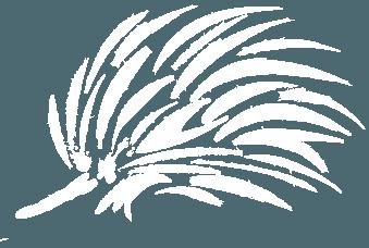 logo prickly moses echidna